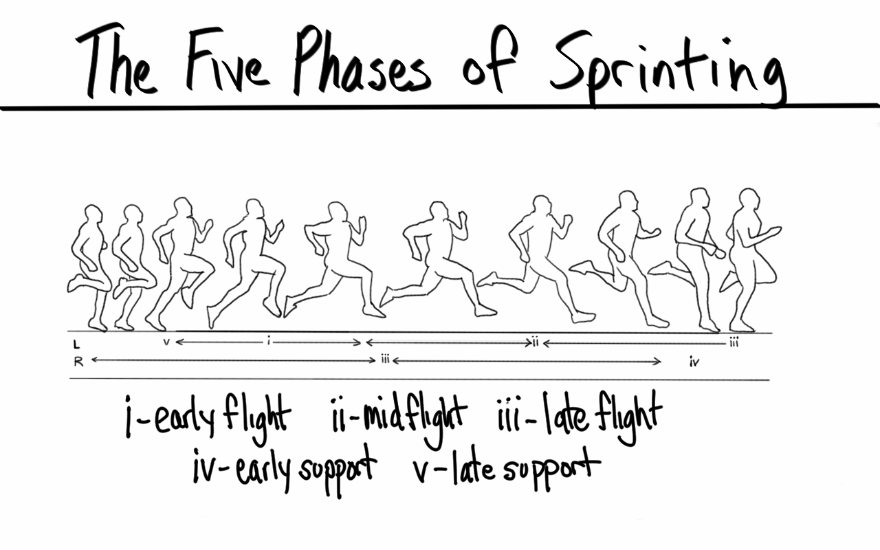 Five Phases of Sprinting