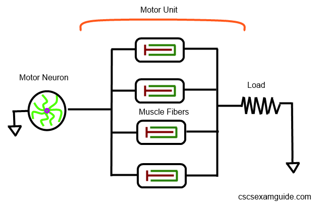 Circuit Diagram of a Motor Unit